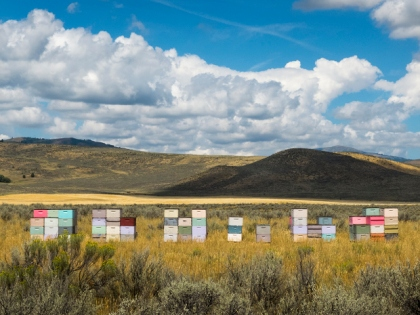 Colored bee hives along the Portnuef River near Chesterfield, Idaho.